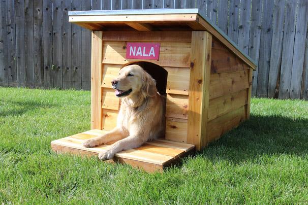 DIY Dog House From Ryobi Nation