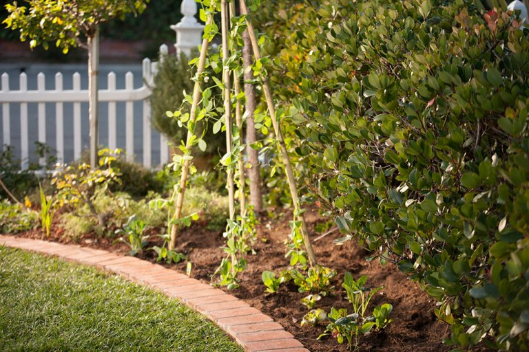 DIY Veggie Garden Trellis From Bonnie Plants